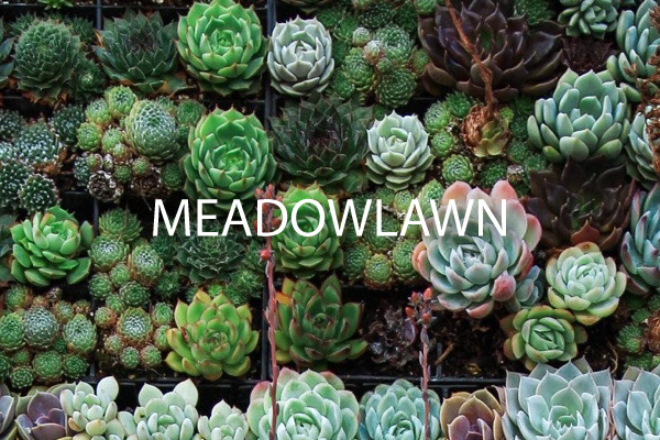 neighborhood guide Meadowlawn